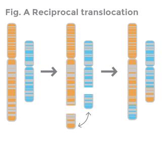 Доимплантацинные генетические исследования